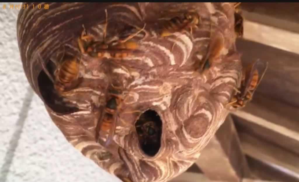 スズメバチ駆除施工前