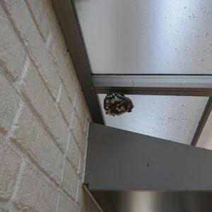 【岡山市南区】アシナガバチの巣の駆除☆迅速丁寧な対応で安心できたとお喜び頂けました。