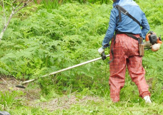 岡山市で草刈りにかかる料金相場は?追加料金や業者選びのコツまで解説